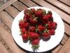 erdbeeren-051