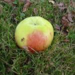 Apfelmus